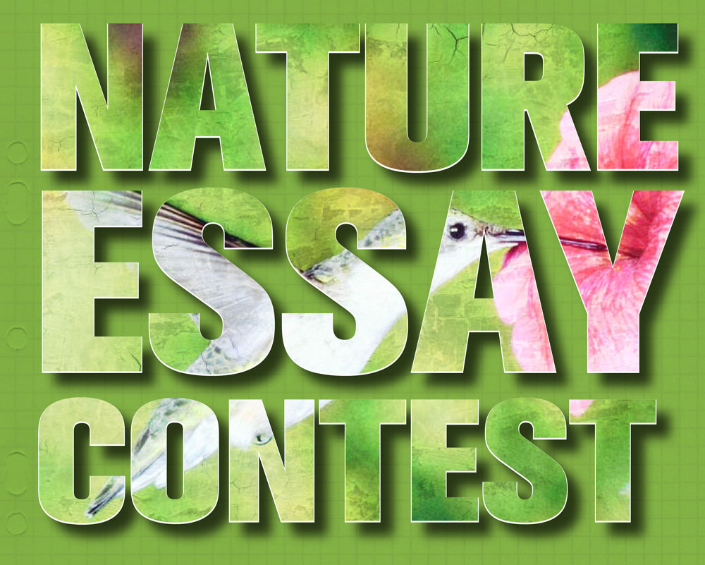 Conservation of nature essay for kids